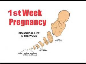 can stameta remove a four week pregnancy picture 6
