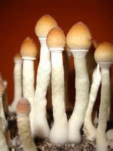 albino penis picture 2