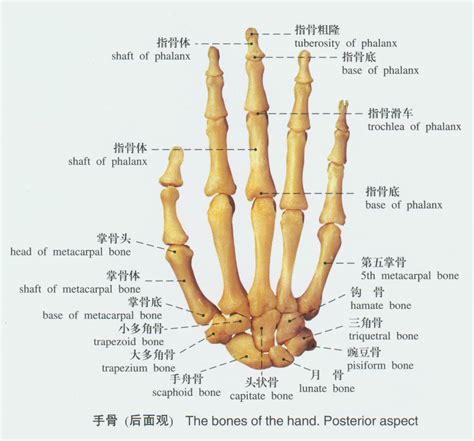ellipsoid joint picture 11