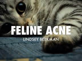 feline chin acne picture 3