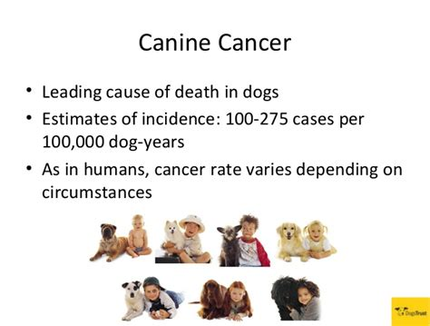 causes of canine loss of appee picture 12