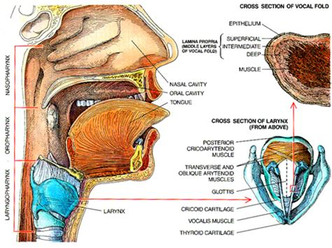 find a new thyroid doctor picture 7