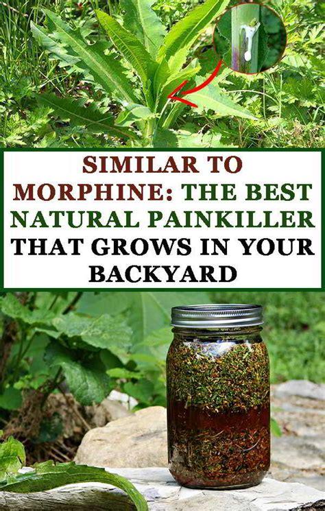 natural painkiller euphoria picture 9