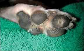dog corns and warts picture 1