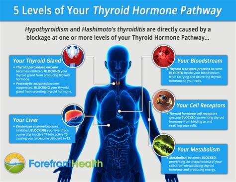 free healthy thyroid info picture 13
