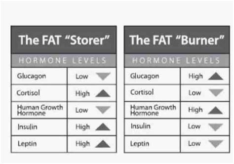 what are fat burning hormones picture 10