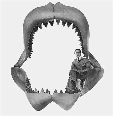 fossilized shark h picture 2