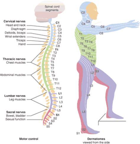 women joint pain symptom picture 13