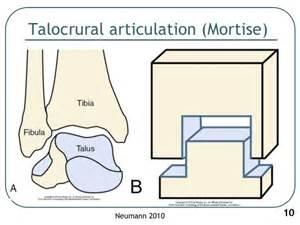 subtalar joint picture 2