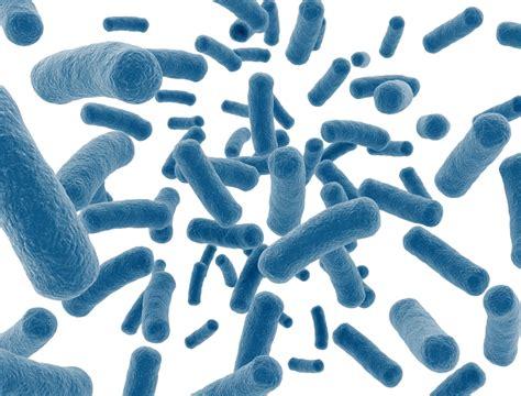 probiotic bacteria picture 5