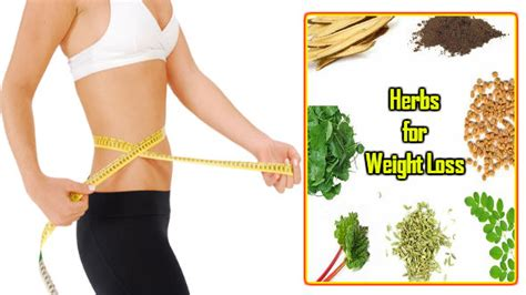 weight loss herbs in hindi picture 1