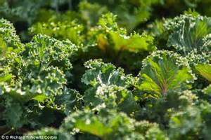 lettuce to thyroid problems picture 11