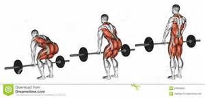 4-6 reps add muscle picture 15