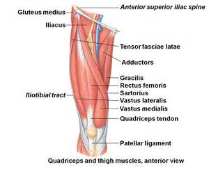 dog pulled muscle picture 14