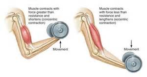 and isotonic muscle contraction picture 13