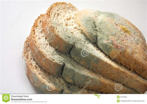 fungus on bread picture 6