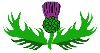 thistle graphics picture 10