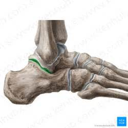 subtalar joint picture 10