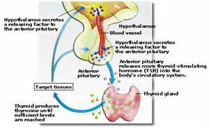 can your body not absorb thyroid picture 6