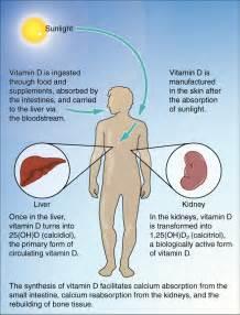 increase testosterone vitamin d picture 3