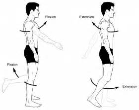 joint flexion rotation anatomy picture 10
