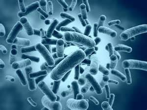 bacteria picture 9