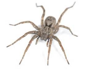 spider picture 2