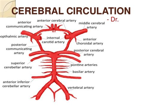 flowchart of blood circulation picture 3