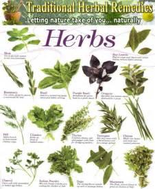 herbal list of herbal medicine picture 2