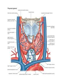 architectural distortion of thyroid gland picture 9