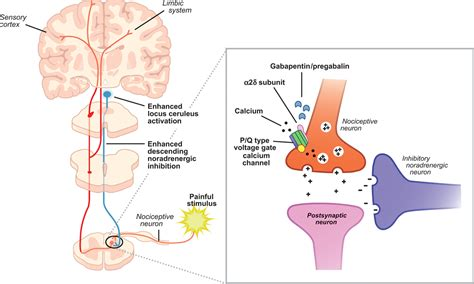neurontin adjuvant pain relief picture 5