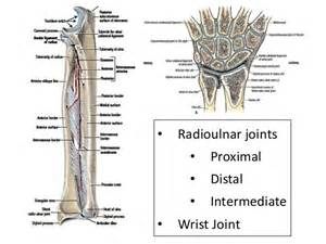 distal radial ulnar joint picture 15