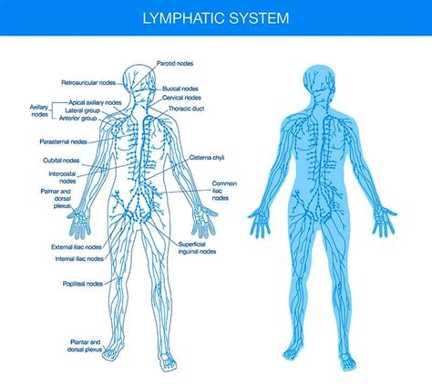 cellulite lymph system heat picture 11