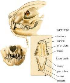 cats teeth picture 3