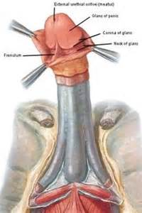 stimulating the penis hole picture 19