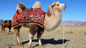 camel h pictures picture 5