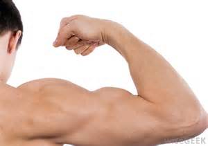 muscle strength definition picture 17