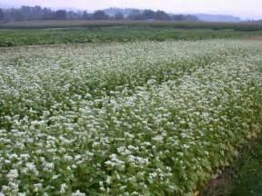colorado alfalfa growers picture 18
