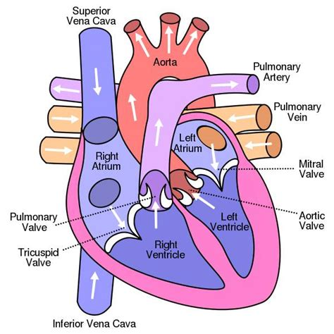 gamot sa high blood pressure causes picture 5