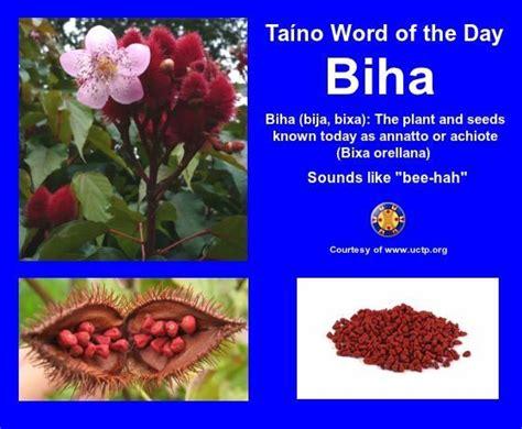 puerto rican herbal remedies picture 2