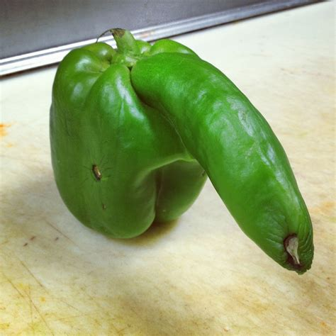 cucumber shaped penis picture 3