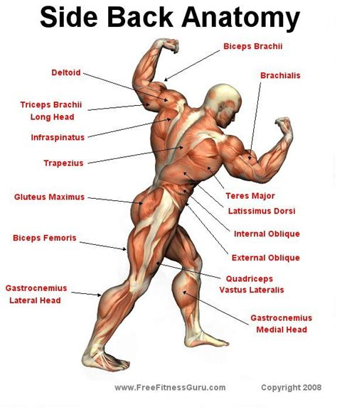 male muscle free picture 19