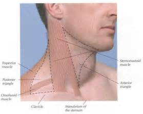 lymph nodes back of neck from acne picture 17