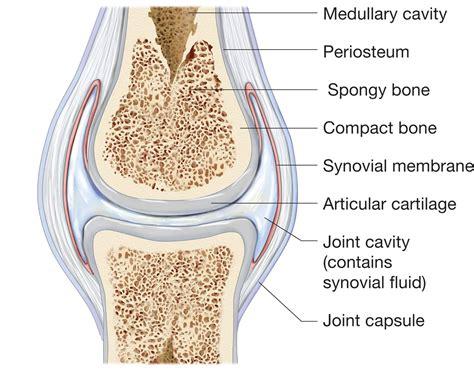 ellipsoid joint picture 9