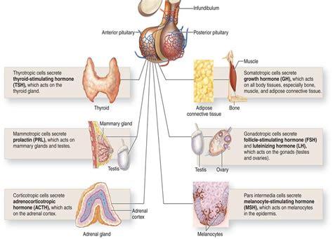 menstruation + thyroid picture 7
