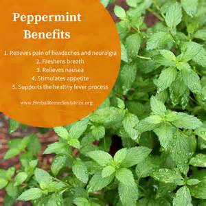 peppermint tea herbal remedies picture 13