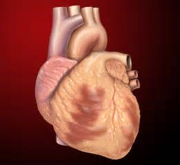 research articles regarding the aging heart picture 1