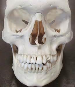 teeth human picture 5