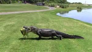 alligators skin preservation picture 17