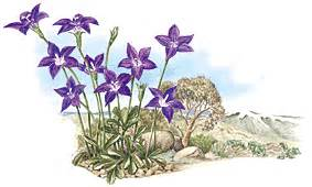 what is the herb that acts as an picture 11